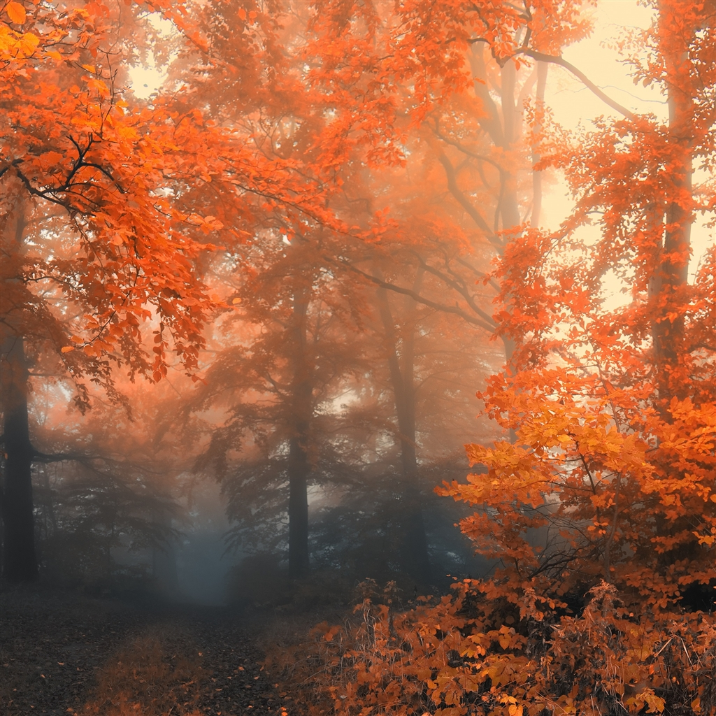 Autumn-19-ipad-4-wallpaper-ilikewallpaper_com_1024