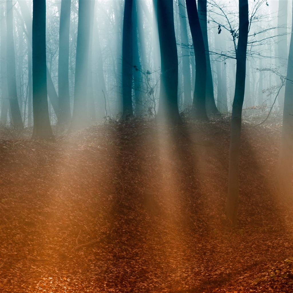 Autumn-Forest-ipad-4-wallpaper-ilikewallpaper_com_1024