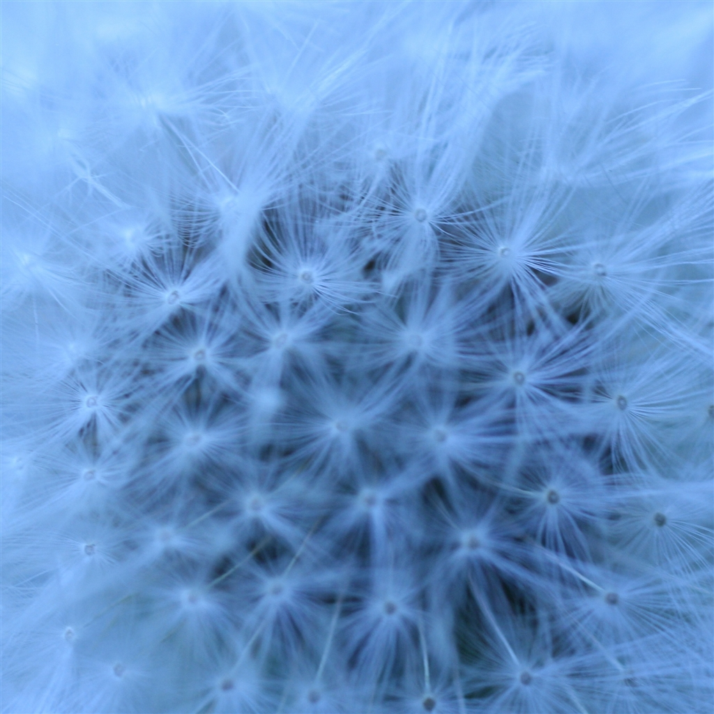 Fluffy-Head-Blue-ipad-4-wallpaper-ilikewallpaper_com_1024