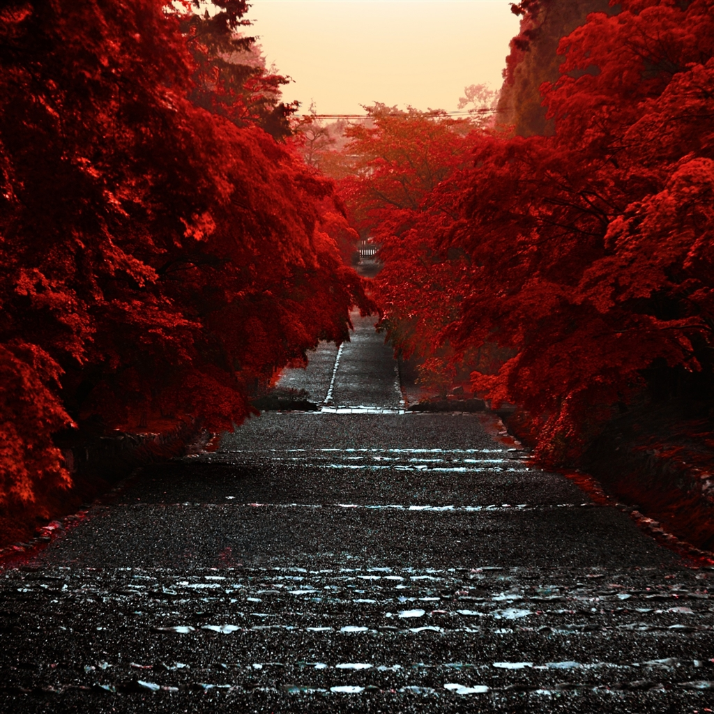 Japan-Honshu-Island-ipad-4-wallpaper-ilikewallpaper_com_1024