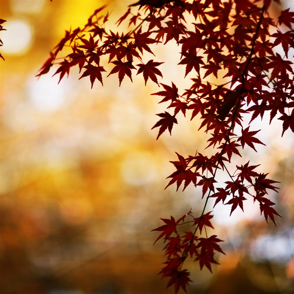 Red-Foliage-Bokeh-ipad-4-wallpaper-ilikewallpaper_com_1024