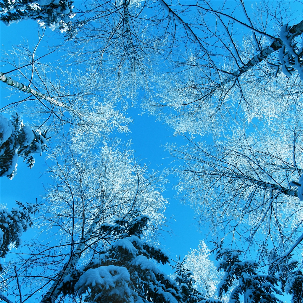 Tree-Tops-And-Blue-Sky-ipad-4-wallpaper-ilikewallpaper_com_1024