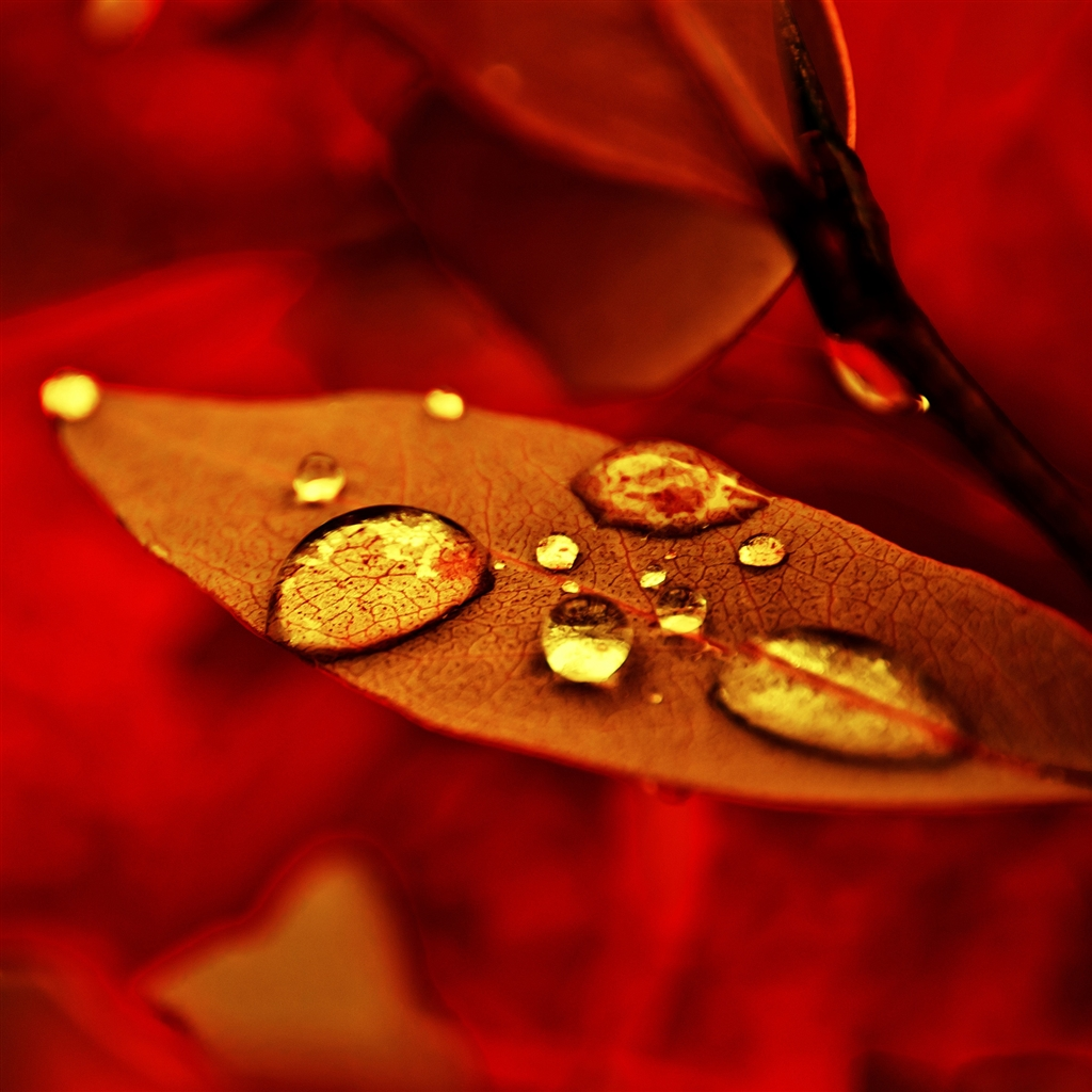 golden-drops-ipad-4-wallpaper-ilikewallpaper_com_1024